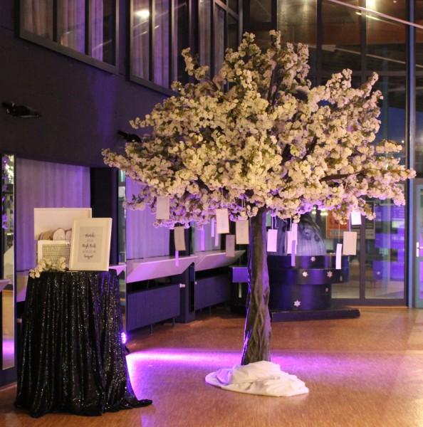 Kirschblütenbaum, 3,80m